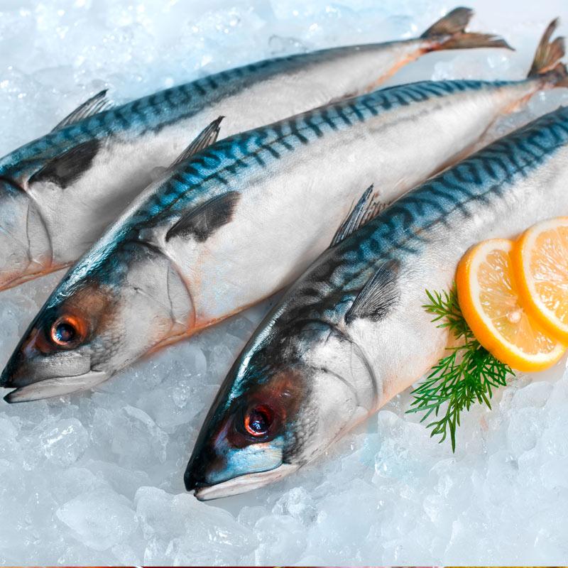 Fisch Sinem